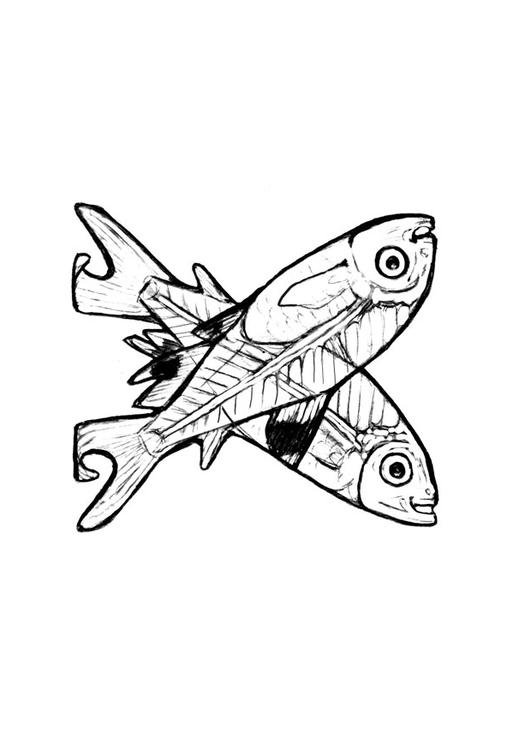 Coloring page x x ray fish img 24821