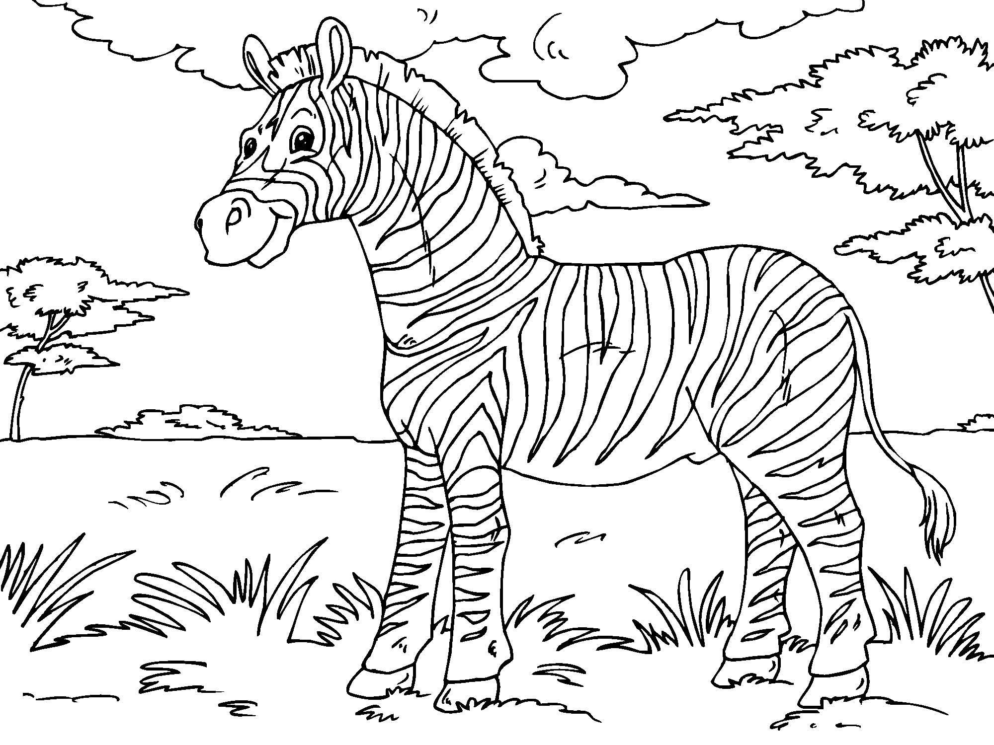 coloring page zebra img 23013