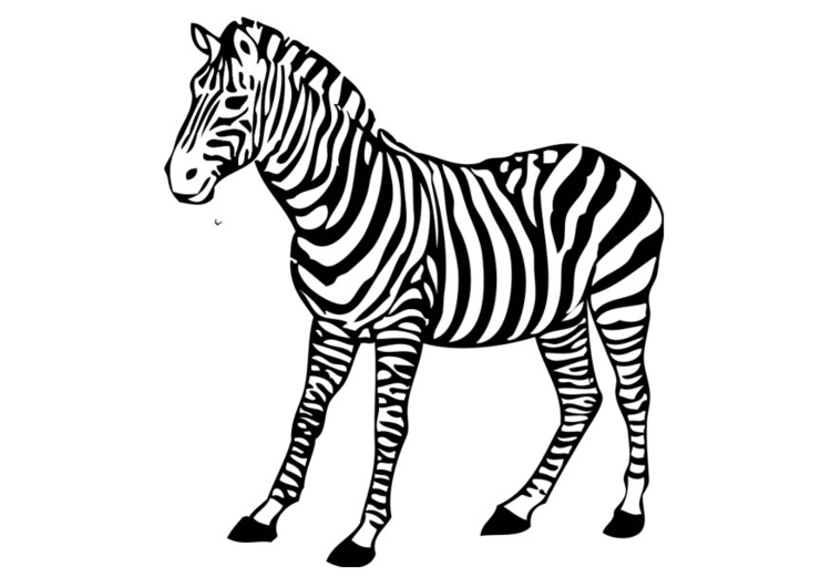 - Coloring Page Zebra - Free Printable Coloring Pages