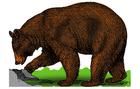 Image bear