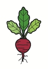 Images beetroot