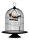 Images bird in cage