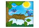Image bird's nest