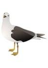 Image bird - seagull