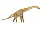 Image Brachiosaur