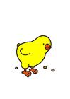 Image chick