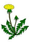 Image dandelion