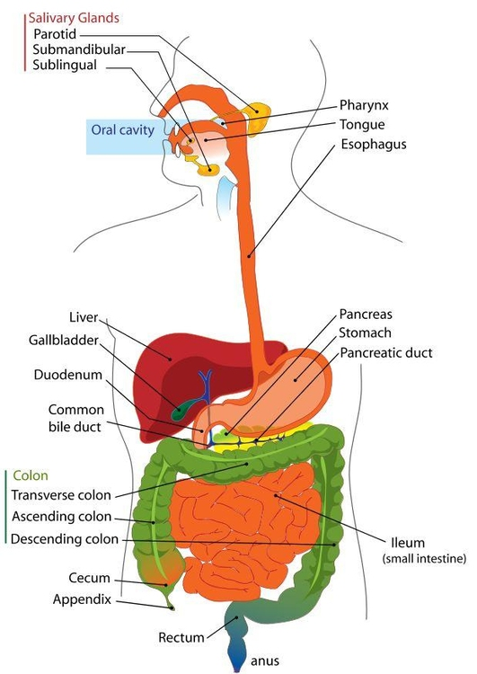 Image digestive system