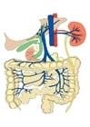 Image digestive system