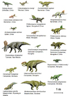 Images Dinosaurs (Basal Ceratopsia)