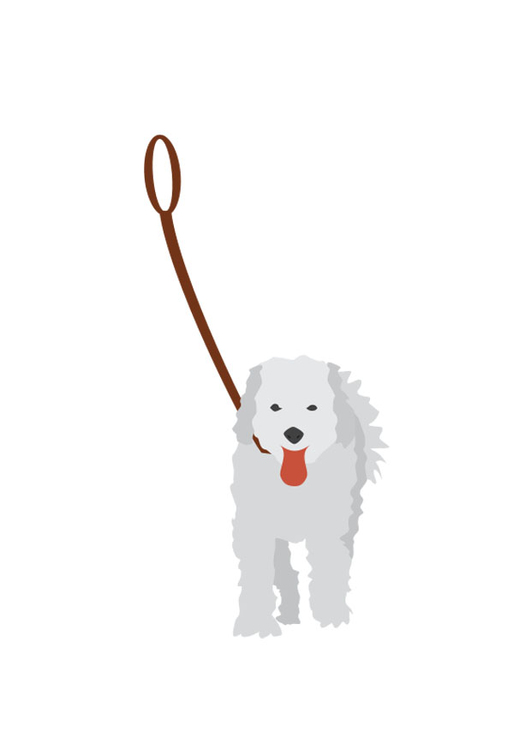 Image dog on lead