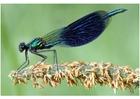 Photo dragonfly