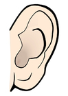 Coloring pages ear - quiet