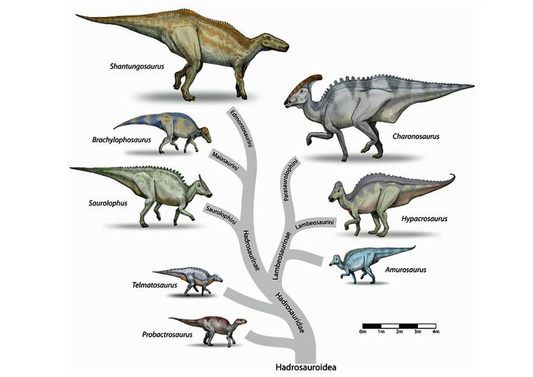 Image evolution of the dinosaurs