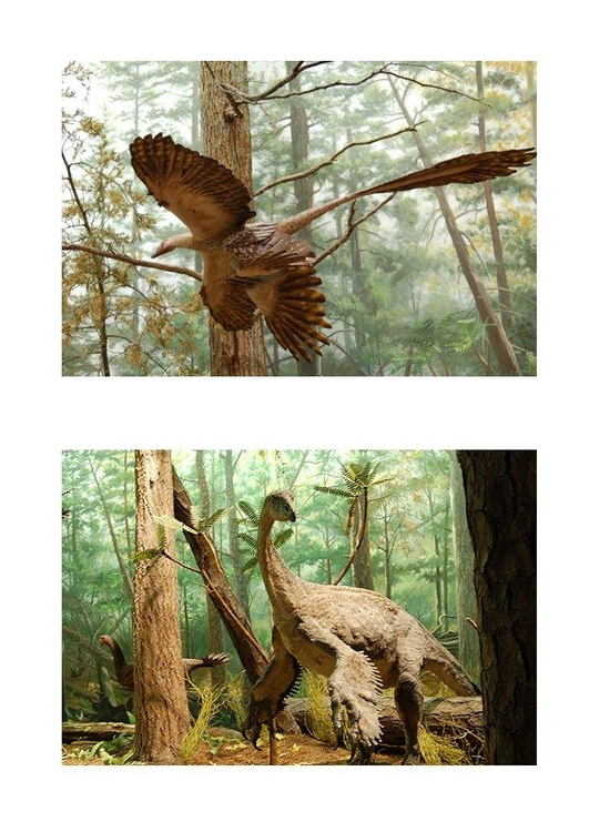 Image feathered dinosaurs