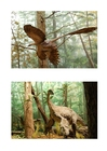 Images feathered dinosaurs