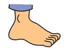 Image foot