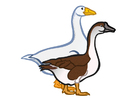 Image geese