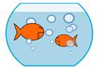 Image goldfish