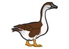 Image goose