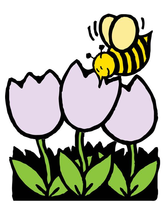 honey bee and tulips