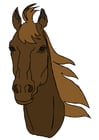 Image horse's head