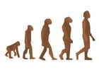 Image human evolution