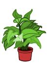 Image indoor plant