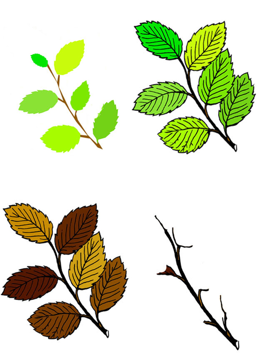 Image leaves in four seasons