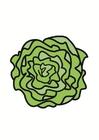 Image lettuce