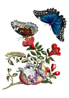 Image pomegranate with butterflies