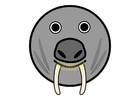 Image r1- walrus