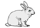 Images Rabbit