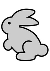 Image rabbit