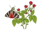 Image rasberries with butterfly