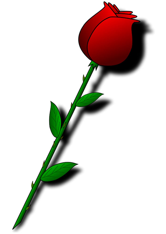 Image red rose