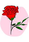 Image red rose