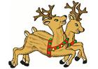 Image reindeers
