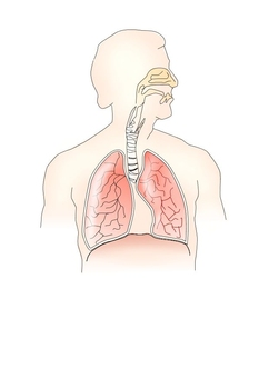 Image respiratory system