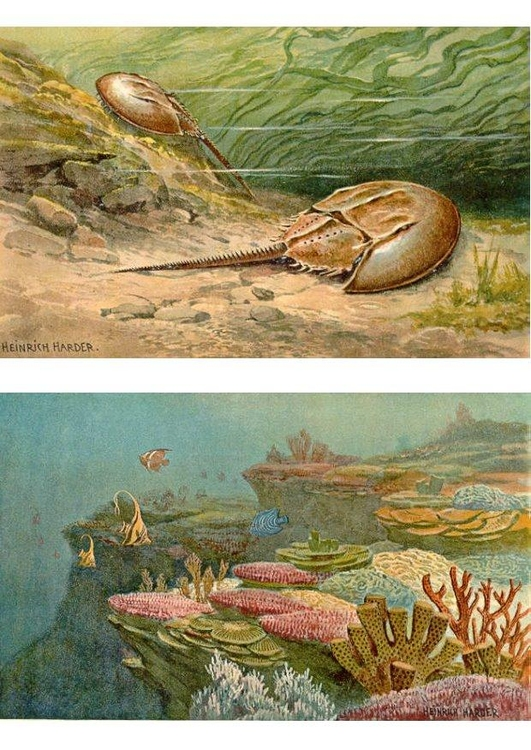 Image sea animals