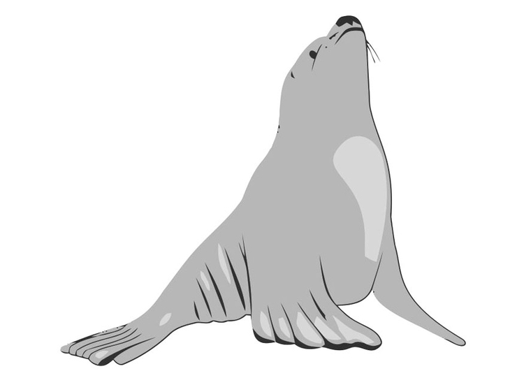 Image sea lion