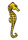 Image seahorse