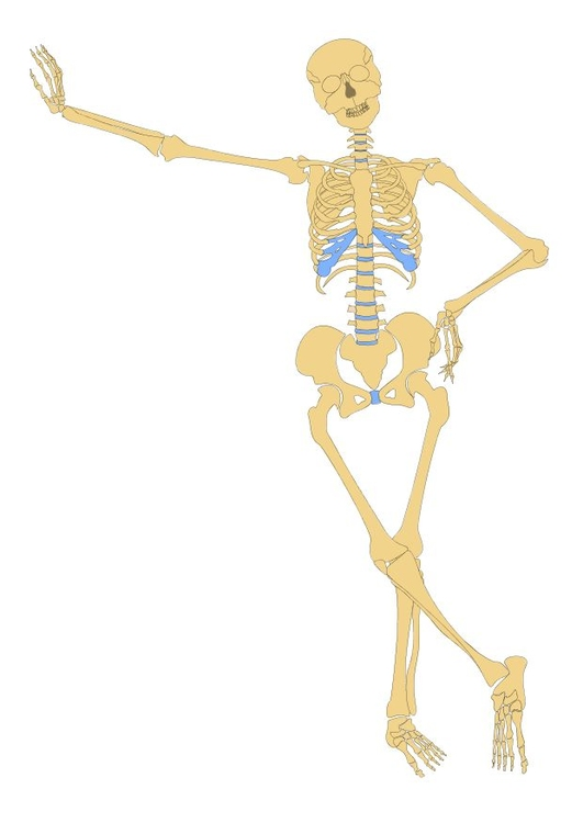 Image skeleton