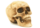Image skull
