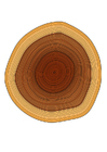 Coloring pages tree rings