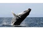 Photo whale
