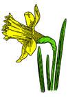 Image wild daffodil