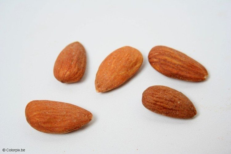Photo almonds