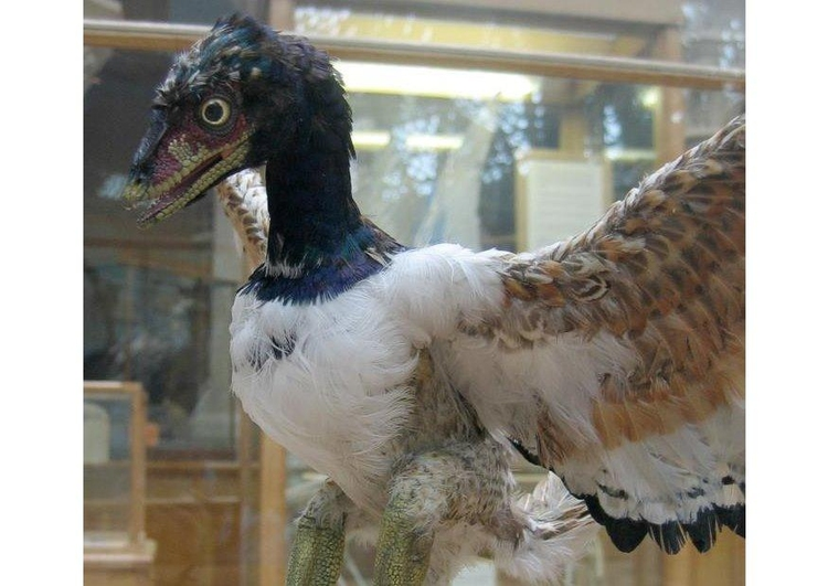 Photo Archaeopteryx (model)