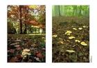 Photo autumn 2